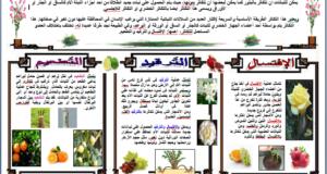 درس تكاثر النباتات بدون بذور