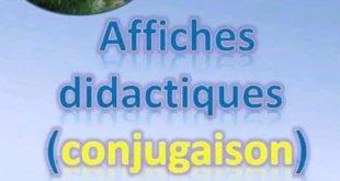 Conjugaison